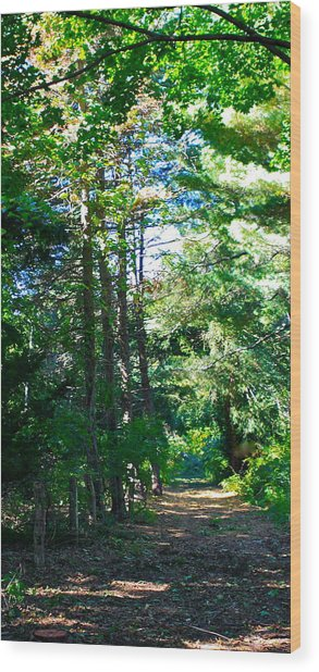 Woodland Path Wood Print