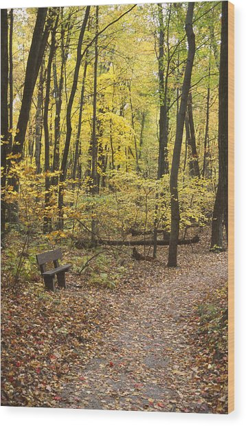 Woodland Respite Wood Print