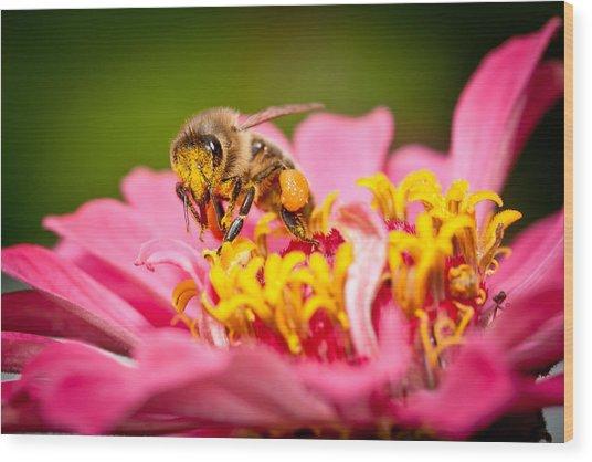 Worker Bee Wood Print