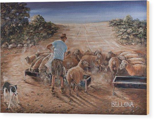 Working Sheep In South-africa Wood Print by Wilma Kleinhans