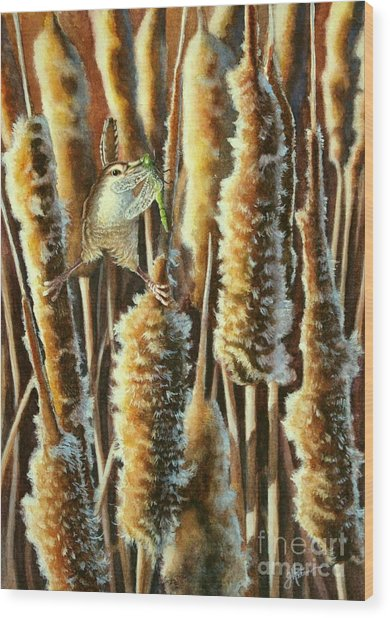 Wren And Cattails 2 Wood Print