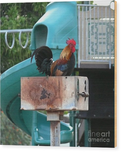 Wrong Playground Mr Rooster Wood Print by Terri Thompson
