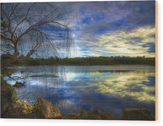 Yanchep Wood Print by Imagevixen Photography
