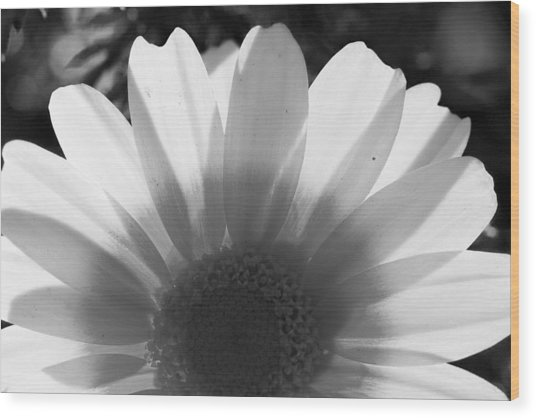 Yellow And White Flower Wood Print