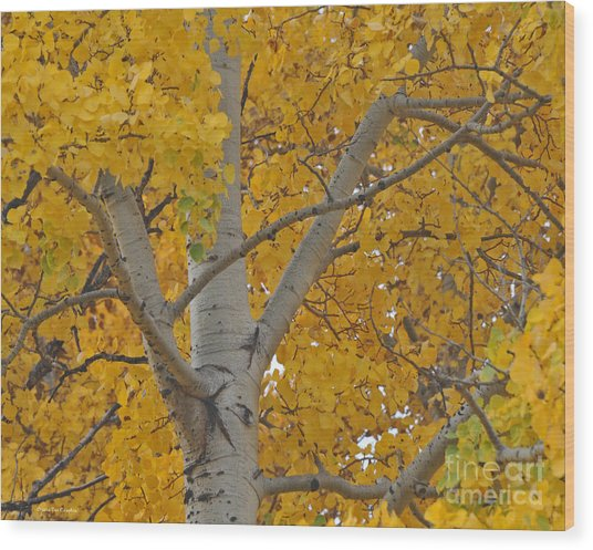 Yellow Aspen Autumn Tree Grand Teton National Park Wood Print