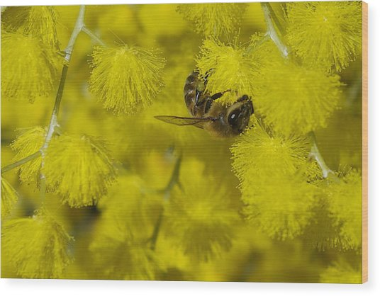 Yellow Bee Wood Print