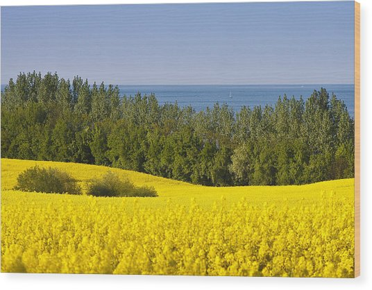 Yellow Blue Green Wood Print