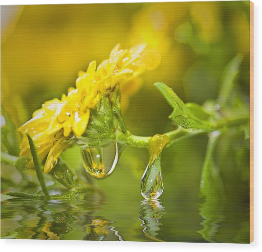 Yellow Drop Wood Print by Trudy Wilkerson