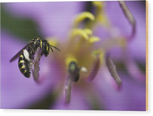Yellow Faced Bee Wood Print