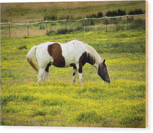 Yellow Fields Horse Wood Print