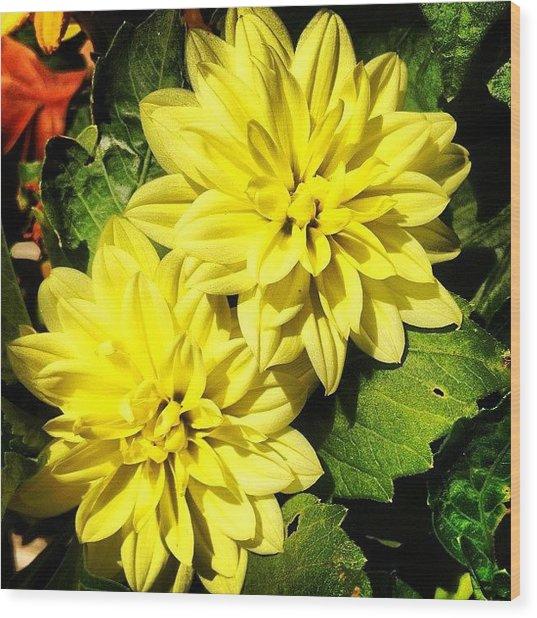 #yellow #flower #petals #closeup Wood Print