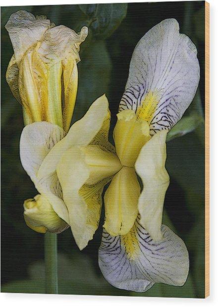 Yellow Iris Wood Print by Michael Friedman