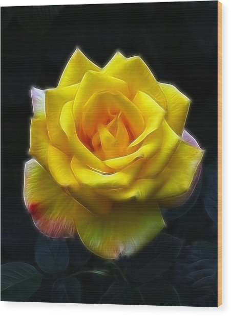 Yellow Rose In The Moonlight Wood Print by Georgiana Romanovna