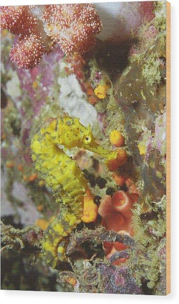 Yellow Seahorse Wood Print by Peter Scoones