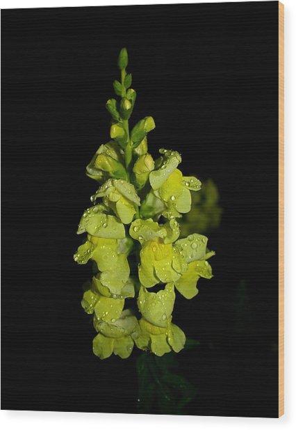 Yellow Snapdragons Wood Print