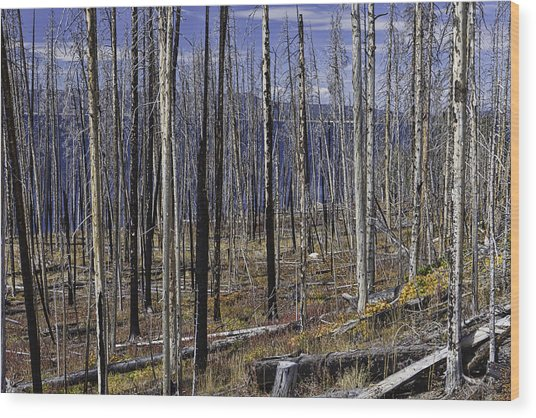 Yellowstone Lake Colors Wood Print
