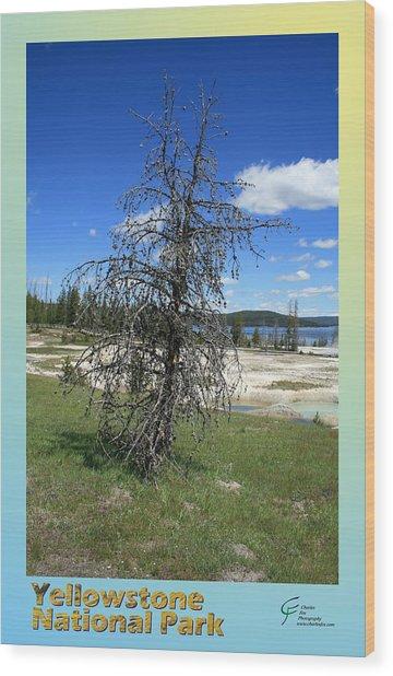 Yellowstone Np 003 Wood Print by Charles Fox