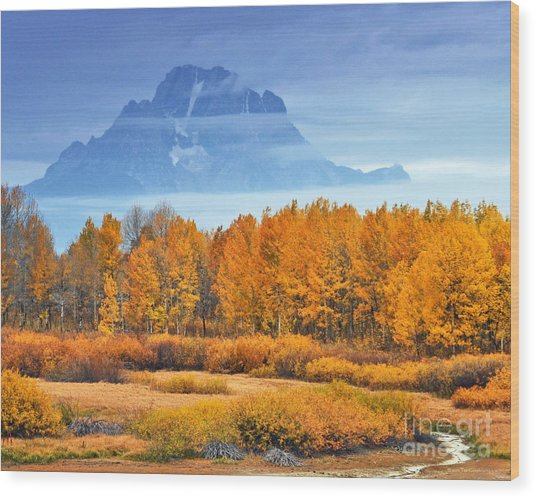 Yelow And Orange Autumn Grand Teton National Park Wood Print