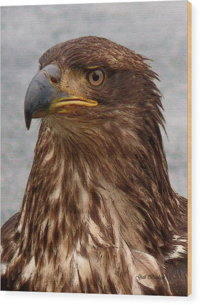 Young Bald Eagle Portrait Wood Print