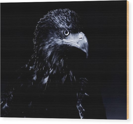 Young Eagle Wood Print
