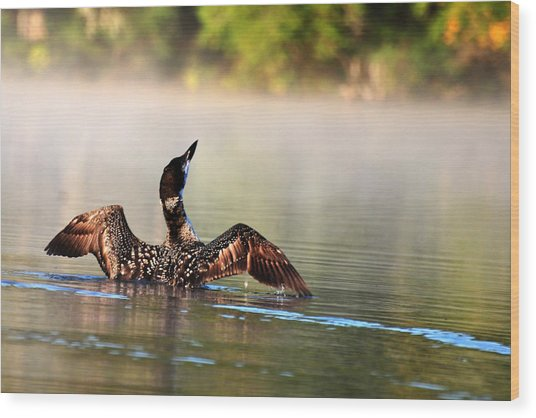Young Loon Wood Print