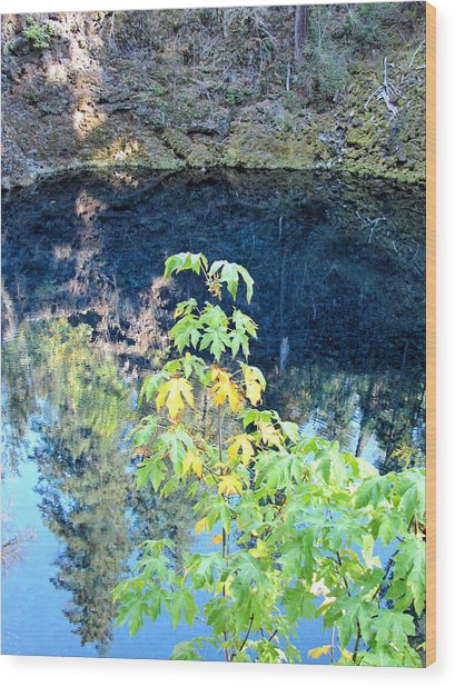 Young Maple At Blue Pool Wood Print