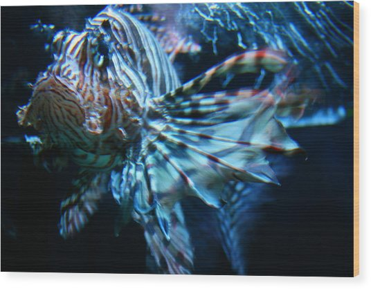 Your Lion Fish Wood Print