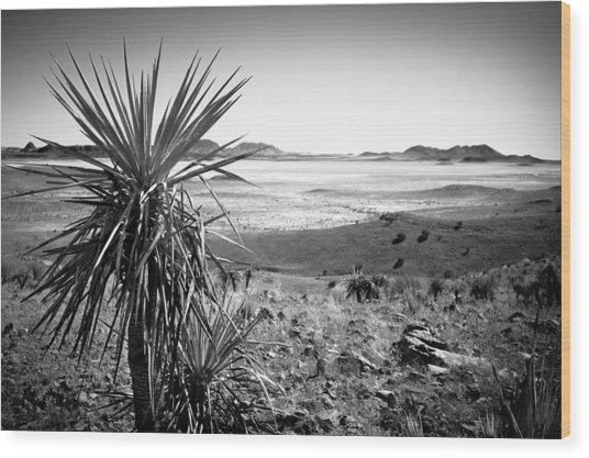 Yucca With A View Wood Print