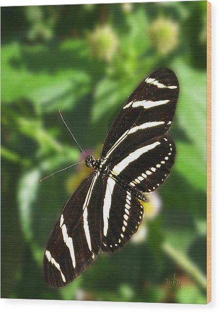 Zebra Heliconian Butterfly 1 Wood Print