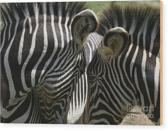 Zebra Lovers Wood Print by Carol Wright