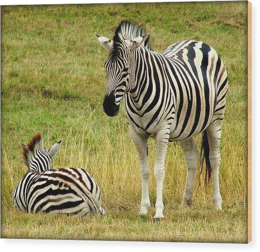 Zebra Mother And Baby Wood Print by Judy Garrett