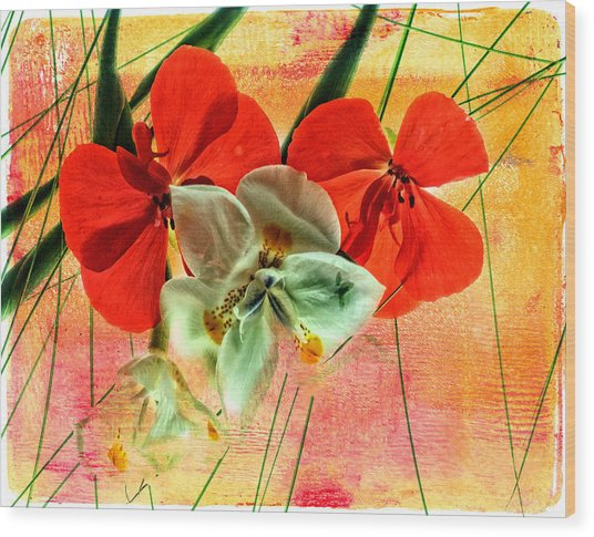 Bougainvillea And Paper White Wood Print