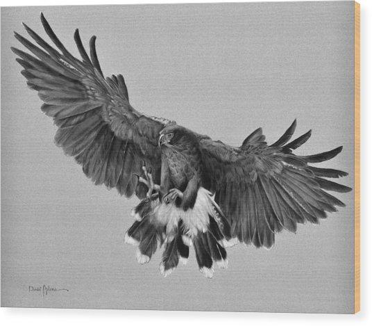 Da181 Harris's Hawk By Daniel Adams Wood Print