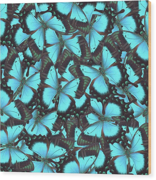 Green Swallowtail Butterfly Wood Print