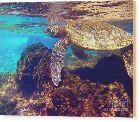 Honu On The Reef Wood Print