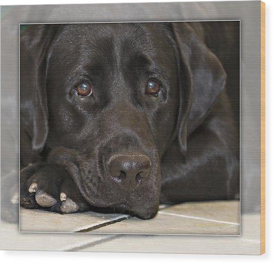 Labrador Retriever A1a Wood Print