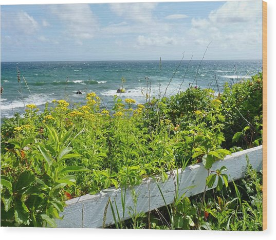 Manomet Point Wood Print