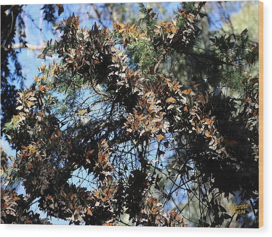 Monarch Large Cluster Wood Print