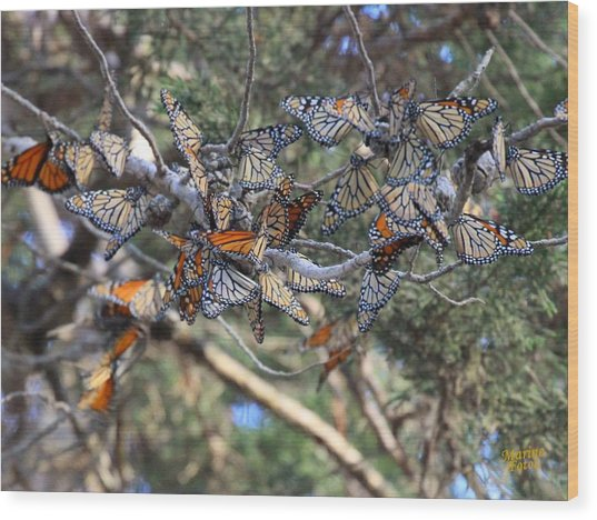 Monarch Mixed Cluster Wood Print