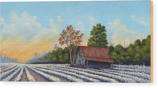 Montmorenci Cottonfield Wood Print by Jerry Walker