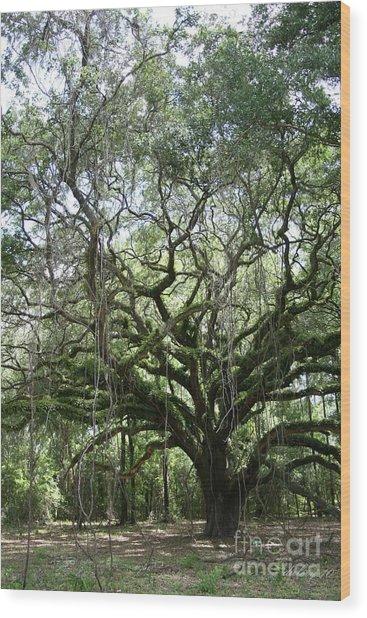 Oak Sentinel Wood Print