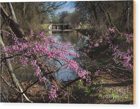 Redbuds And A Distant Bridge Wood Print