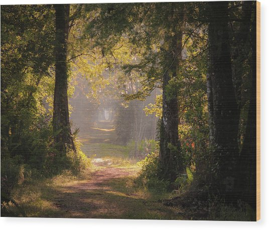 Swamp Trail Wood Print