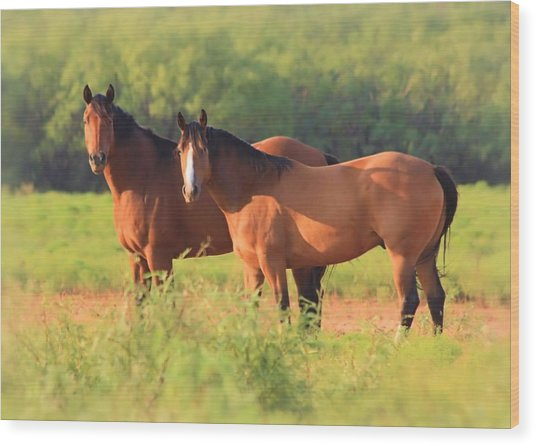 Two Horses Watching Wood Print