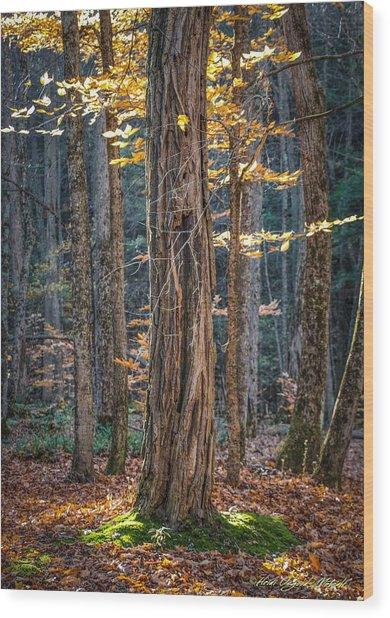 #0187 - Dummerston, Vermont Wood Print
