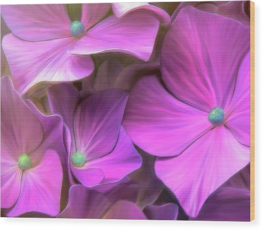 Hydrangea Florets Wood Print