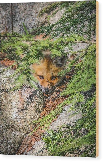 #0527 - Fox Kit Wood Print