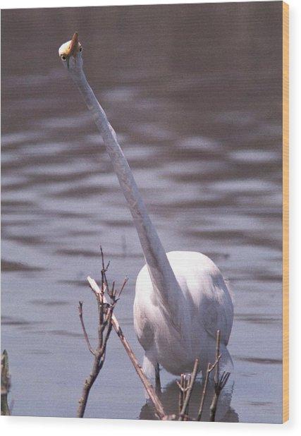 070406-9 Wood Print by Mike Davis
