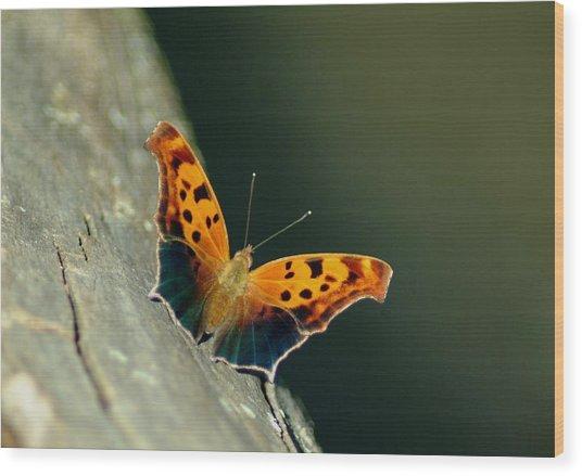 071609-211 Wood Print by Mike Davis