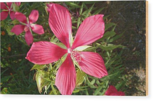 Hibiscus Coccineus Wood Print